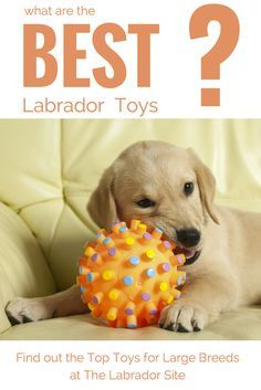 Looking at the best dog toys for large breeds like Labradors. Sharing our knowledge about indestructible dog toys, dog puzzle toys, dog chew toys, soft toys for dogs and many more. Best Puppies, Toy Puppies, Best Dogs, Dogs And Puppies, Doggies, Labrador Puppies, Best Dog Toys, Dog Chew Toys, Pet Toys