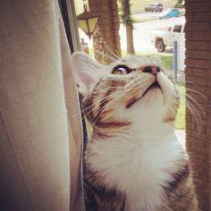 【#cat #maceo #kitty #daydream】  taramiissuu@Instagram