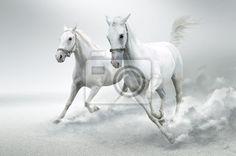 """Papier peint """"actif, bête, arabo - chevaux blancs"""" ✓ Un large choix de matériaux ✓ Impression écologique 100% ✓ Regardez des opinions de nos clients !"""