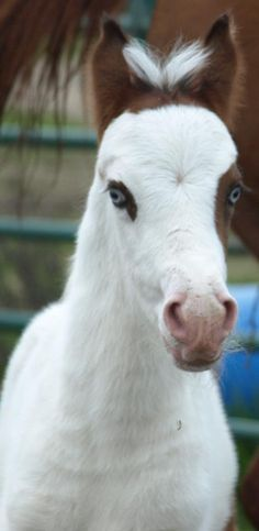 Not a big fan of white faced horses but this little thing is gonna be gorgeous