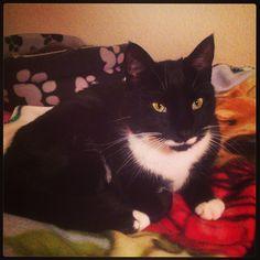 Roxy Cat | Pawshake Farnham