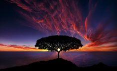 Un arbre devant un coucher de soleil