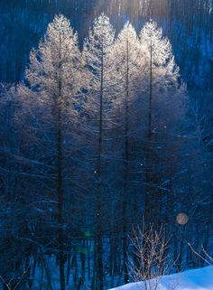 Diamond dust - Winter in Biei, Hokkaido, Japan