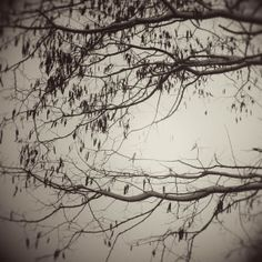 trees branches limbs monochrome photography by judeMcConkeyPhotos, $30.00
