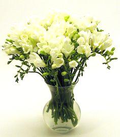 Freesia | Freesia Flower