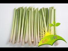 Herbal and Herb: Bạn có biết công dụng của cây sả - Suc Khoe va Doi Song