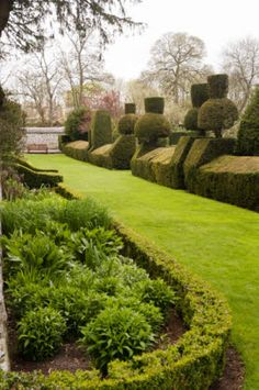 Loving this southern garden!  Wow!  Looks like Alice in Wonderland should be playing croquet!