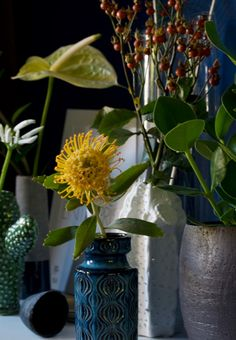 Urban Jungle Bloggers: Plants & Flowers by @X1114