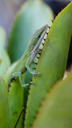 Taken at the Florida Botanical Gardens, Largo, FL