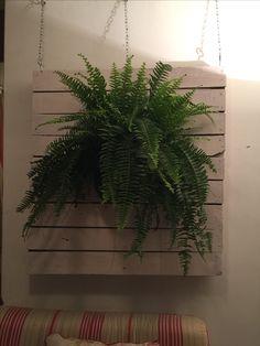 #plants #indoor #pallet
