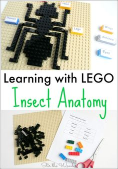 Learning with LEGO Insect Anatomy- Turn a lesson about insect anatomy it into a memorable learning activity by using LEGO bricks to build and label all the different parts that make up insects!