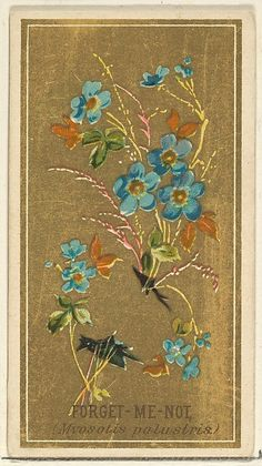Forget-Me-Not (Myosotis palustris), from the Flowers series for Old Judge Cigarettes