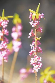 Landscape Photos, Red Roses, Flowers, Plants, Florals, Red Rose Flower, Plant, Flower, Landscape Pictures