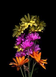 Untitled (Orange Fuchsia Yellow)  Floral scanography by Toby Braun  Feb 2015