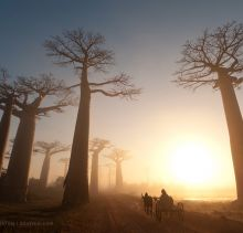 A collection of the best shots of National Geographic over the past 3 years. A collection of the best shots of National Geographic over the past 3 years. - Interesting, Nature, Places - Check out: Unique Photos From National Geographic on Barnorama Le Baobab, Baobab Tree, National Geographic Photography, National Geographic Photos, Madagascar Travel, Parc National, Ikon, Travel Inspiration, Nature