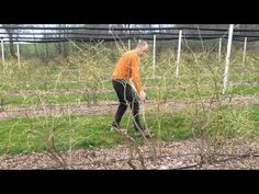 Názorná ukázka střihání velké kanadské borůvky 1. - YouTube Gardening, Youtube, Lawn And Garden, Youtubers, Youtube Movies, Horticulture