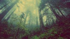 Green forest in the fog #desktop #wallpaper #fog #forest #nature #trees #wood