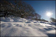 Wistman's Wood-Dartmoor