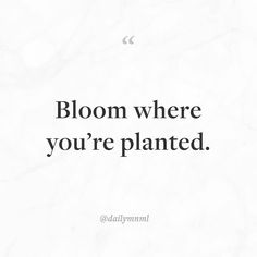 """Bloom where you're planted.""    Feel free to share our posts with anyone you'd like.  You can also find us here: dailymnml.com Twitter: @dailymnml    Tags: #dailymnml #minimalism #quote #quotes #minimal #minimalist #minimalistic #minimalquote #minimalzine #minimalmood #minimalove #lessismore #simple #simplelife #simpleliving #simplicity #instaminim #stoicism #goodlife #inspiration #motivation #slowlife #slowliving #mindfulness #love #wisdom #mnml #quotesoftheday #quotestoliveby…"