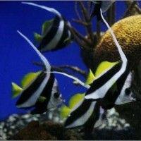 National aquarium dc