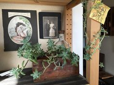 New plants and display updates. #houseplants #succulents #cactus #vintage #diy #vintage #bohemiandesign #scandinaviandesign #moderndesign