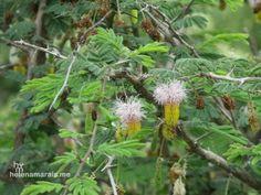 Flowers Dandelion, Flowers, Plants, Photography, Animals, Photograph, Animales, Animaux, Dandelions