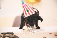 Zoella   Puppy Party   Happy Birthday Nala!