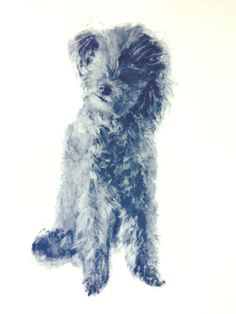 c030739d1fb65 24 Best Schnoodle images in 2015 | Dogs, Schnauzer, Dogs, puppies