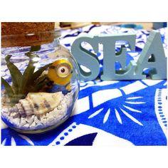 . . 砂敷き詰めて貝殻と ミニオン飾ってみた .  #aloha#beach#sea#hawaii#blue #genic_beach#instagood#instalike #happy#love#interior#diy #enjoy#summer#myroom #diy女子#海#ハワイ#アロハ #手作り#ミニオン 2016/06/28 12:15:32