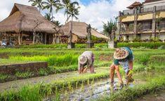 Siapa Bilang Hidup di Desa Tak Bisa Kaya? Coba Buka 6 Ide Usaha Ini!