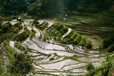 For stressed souls seeking a quiet, relaxed holiday amidst nature's bounty, Banaue Rice Terraces is an ideal getaway. Banaue is a small town in the Philippines and is nestled amidst some spectacular rice terraces. What Is Geography, Places To Travel, Places To See, Banaue Rice Terraces, Philippines Travel, Baguio Philippines, Beautiful Places In The World, Wonders Of The World, Scenery