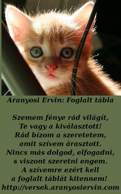 Aranyosi Ervin: Foglalt t Yasmina Rossi, Animals And Pets, Literature, Life Quotes, Album, Pictures, Figurative, Cats, Pets