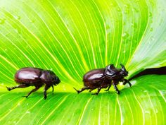 The Rhinoceros Beetle Proves That Men Are the Literal Worst #ITBusinessConsultants