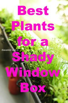 Best Plants for a Shady Window Box
