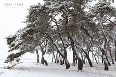 Weather Art, Contemporary Photographers, Kiefer, Walk In The Woods, Winter Beauty, Illustrations And Posters, Ink Painting, Science And Nature, Trees To Plant