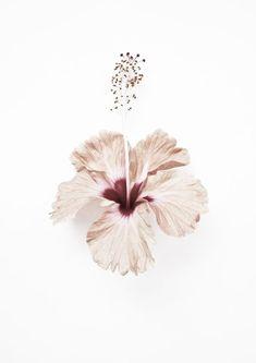 DIY: Tónico facial vitamina C y flor de hibisco