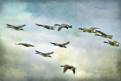 """Mary Oliver Reads """"Wild Geese"""" 
