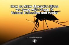 How to Make Mosquito Bites Go Away with these 10 Natural Remedies and Hacks   via #lifeadvancer   lifeadvancer.com