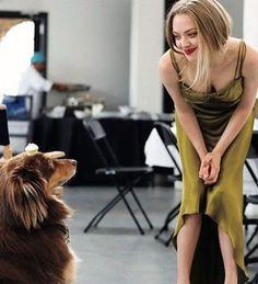 Amanda Seifried, Hollywood Wedding, Blond, Mean Girls, Celebs, Celebrities, Star Wars, Celebrity Style, Celebrity Dogs