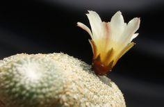 Cactus Plants Are Vanishing: Photos : Discovery News Discovery News, Cactus Plants, Photos, Pictures, Cacti, Cactus