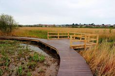 Custom built viewing platform on a boardwalk in wetland nature reserve built by The Wild Deck Company