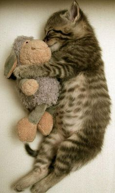 Ok...how cute is this?!?!? A kitty and a plush toy :D