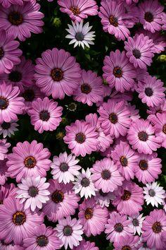 Flower Phone Wallpaper, Butterfly Wallpaper, Tree Wallpaper, Photo Wallpaper, Dark Flowers, Flowers Nature, Exotic Flowers, Beautiful Flowers, Nature Aesthetic