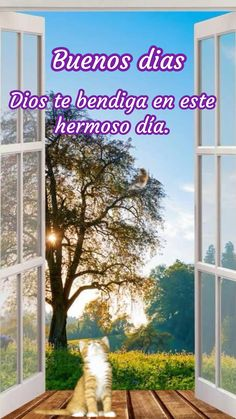 Good Morning In Spanish, Good Morning Gif, Good Morning Flowers, Good Morning Messages, Good Morning Quotes, Beautiful Wallpapers For Iphone, Animated Emoticons, Spanish Inspirational Quotes, Happy Birthday Video