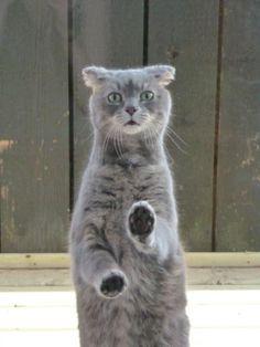 hehe. human cat.