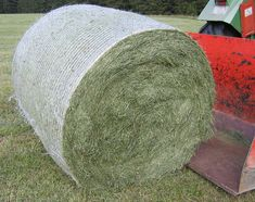 Can degus eat meadow hay? We take a look and check out whether degus can eat meadow hay or whether it should be avoided altogether. Hay Store, Grazing Animals, Degu, Traverse City, Livestock, Guinea Pigs, Pet Care, Canning, Cattle