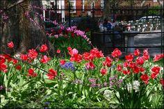 SPNA gardens Stuyvesant Town, Gardens, Plants, Outdoor Gardens, Plant, Garden, House Gardens, Planets