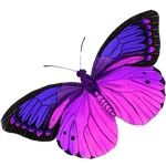 pink butterfly tattoo designs | cool blue/purple butterfly design