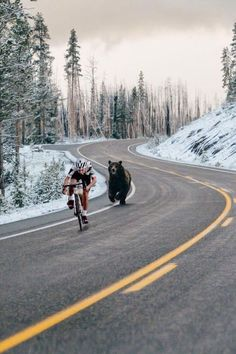 Tour de France has started! Meanwhile In Canada, Tier Fotos, Beautiful Creatures, Animal Kingdom, Mountain Biking, Funny Pictures, Random Pictures, Funny Pics, Funny Stuff