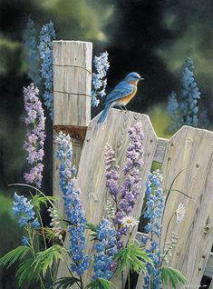 the garden fence. Blue bird and delphiniums.On the garden fence. Blue bird and delphiniums. Pretty Birds, Love Birds, Beautiful Birds, Bluebirds, Bird Watching, Bird Feathers, Belle Photo, Bird Houses, Creatures
